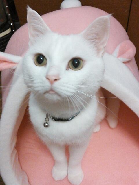 猫の気持ちは鳴き声でわかっちゃう03_01