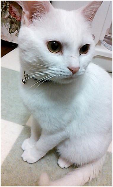 猫の気持ちは鳴き声でわかっちゃう02_01