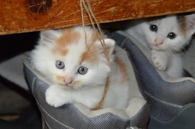 cat-451377_640