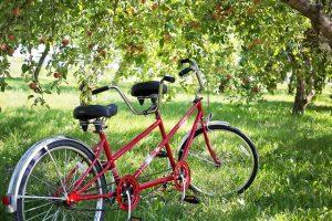 tandem-bike-905067_640