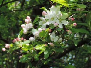 blossom-1067243_640