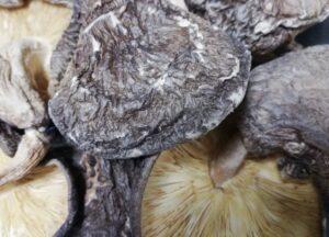 干し椎茸 カビ