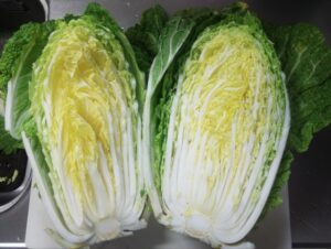 白菜 カビ 腐る