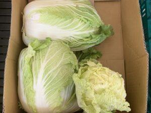 白菜 カビ