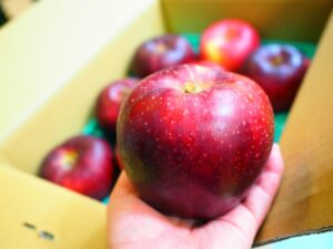 りんご 腐る 原因