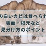 舞茸 カビ