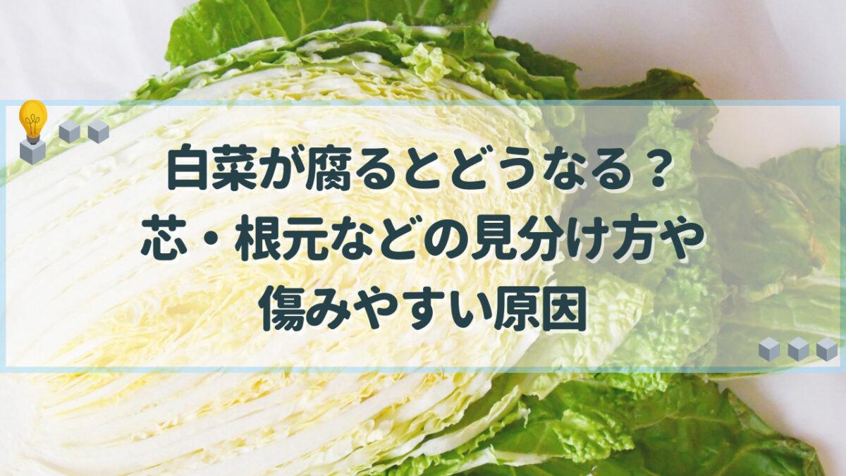 白菜 腐る